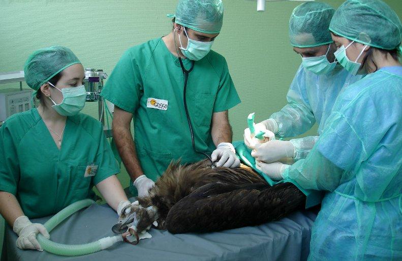 El hospital de fauna salvaje de GREFA