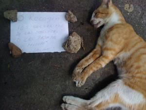 gatos01