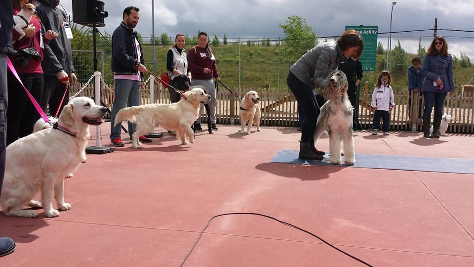 Xito del concurso canino de verdecora majadajonda las - Verdecora mascotas ...