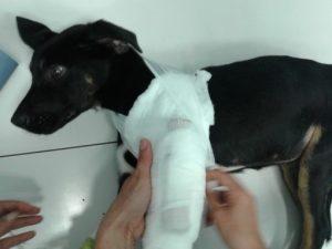 Uno de los animales tratados por Animal Rescue