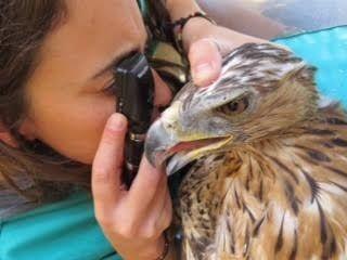 """GREFA Majadahonda recupera 5.600 animales ante el """"total desinterés"""" de la Comunidad de Madrid"""