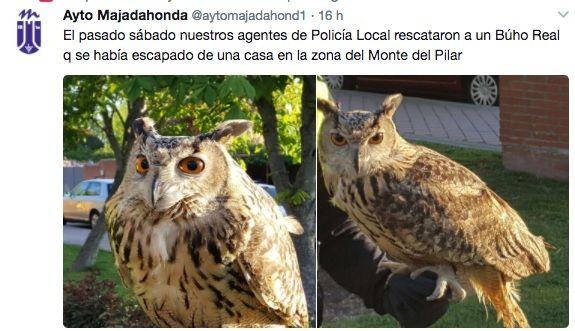 """La polícia de Majadahonda rescata a un búho real """"fugado"""" en el Monte del Pilar"""
