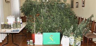 """Un perro policía """"desmantela"""" la marihuana de un chico de Majadahonda en un huerto ecológico de Segovia"""