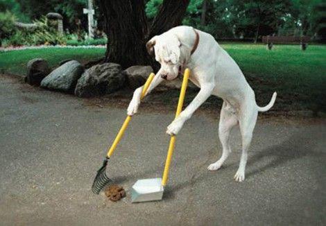 Ayuntamiento de Majadahonda: obligaciones y multas por las mascotas y uso del reciclaje
