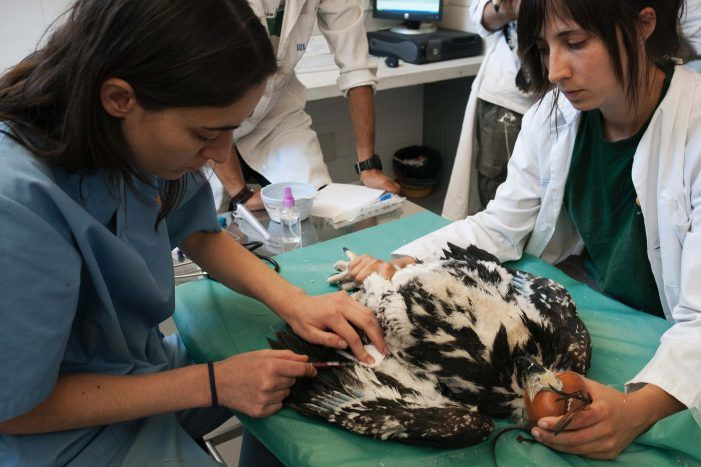El hospital de fauna salvaje de Majadahonda atendió en 2017 a 3.500 animales y formó a 160 voluntarios