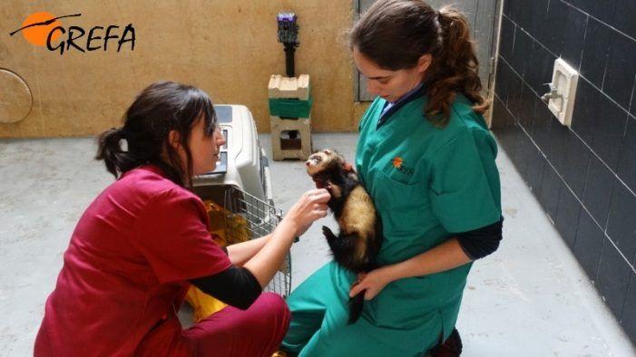 GREFA Majadahonda: Premio de los Veterinarios de Madrid y Día de la Educación Ambiental