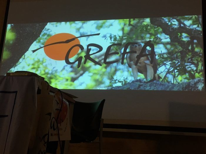 Exito del proyecto de Grefa Majadahonda para recuperar el águila en España