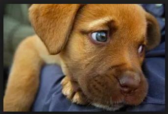 Las cuentas de las perreras municipales: 325.000 € (Majadahonda) y 865.000 € (Las Rozas)