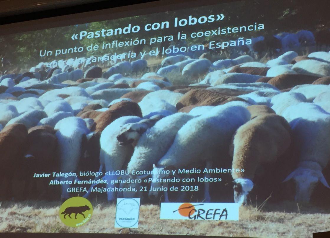GREFA Majadahonda suscita el debate: ganaderos y lobos en vías de extinción