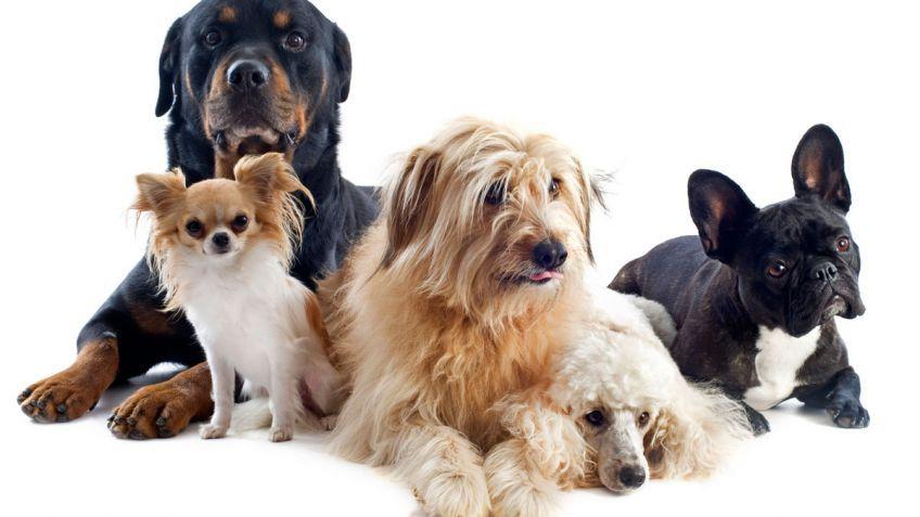 10.000 perros en Majadahonda, campamento Kairos y nueva tienda Phone House