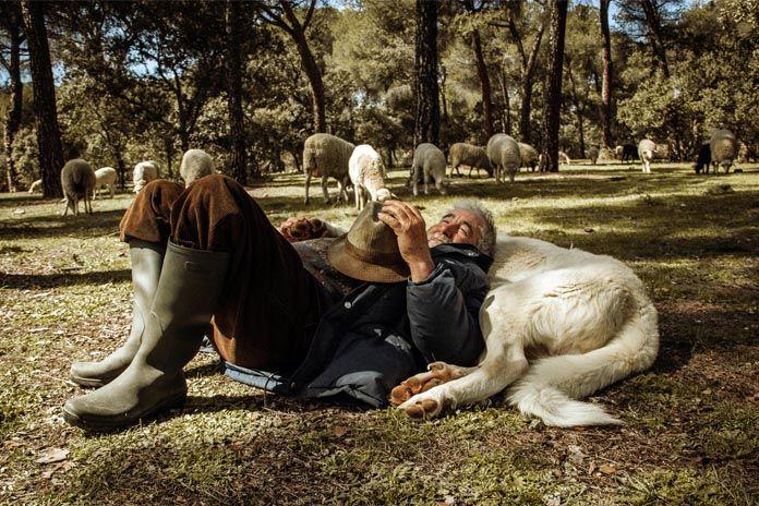 """Monte del Pilar Majadahonda """"hogar de un pastor que lleva 11 años sin vacaciones"""""""