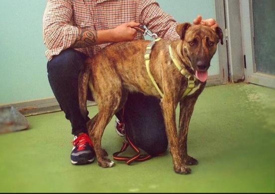 """Falsas """"adopciones"""" de perros en Majadahonda: """"Murdock"""" acabó en el Bernabéu"""