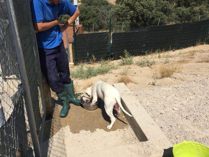 """La perrera de Majadahonda (I): """"Milly"""" atropellada (cadera rota) y """"Lola"""", atada y abandonada"""