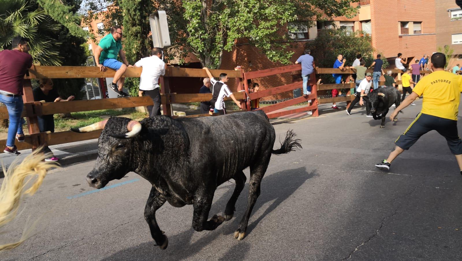 Opinión: Los Encierros de la Fiesta Mayor de Majadahonda 2018
