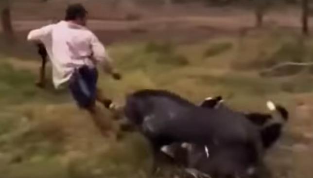"""""""Machos grandes y agresivos"""" de jabalíes embisten a guardias de seguridad en el Pinar del Plantío (Majadahonda)"""