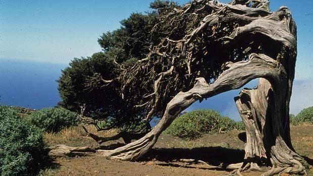 """Los secretos de los árboles como seres vivos se desvelan en la exposición """"Reyes del Bosque"""" en Majadahonda"""
