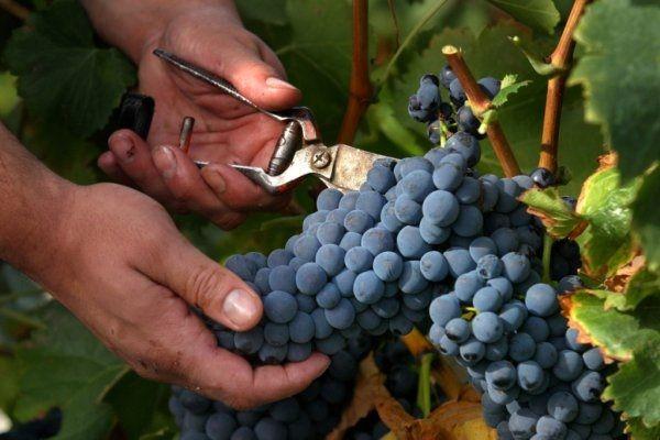 """Las bodegas """"Faustino"""" homenajean al fundador con un vino cosechado en el """"pago riojano de Majadahonda"""""""