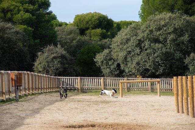 """El Monte del Pilar (Majadahonda) estrena área canina con circuito de """"Agility"""": """"Controla a tu perro mientras juegas con él"""""""