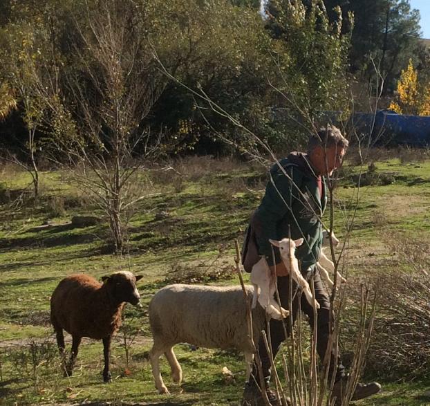 """El pastor de Majadahonda denuncia una """"campaña política"""" de los ecologistas: """"no conocen el campo"""""""