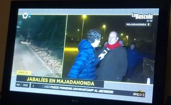 """El Ayuntamiento de Majadahonda niega que los jabalíes tengan """"actitudes agresivas"""" y crea una Oficina Virtual para combatirlos"""