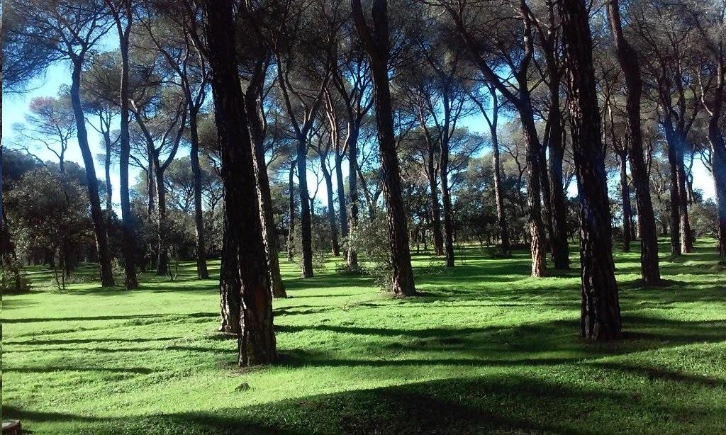 """El """"penoso"""" debate municipal sobre la supresión del Patronato del Monte del Pilar de Majadahonda"""