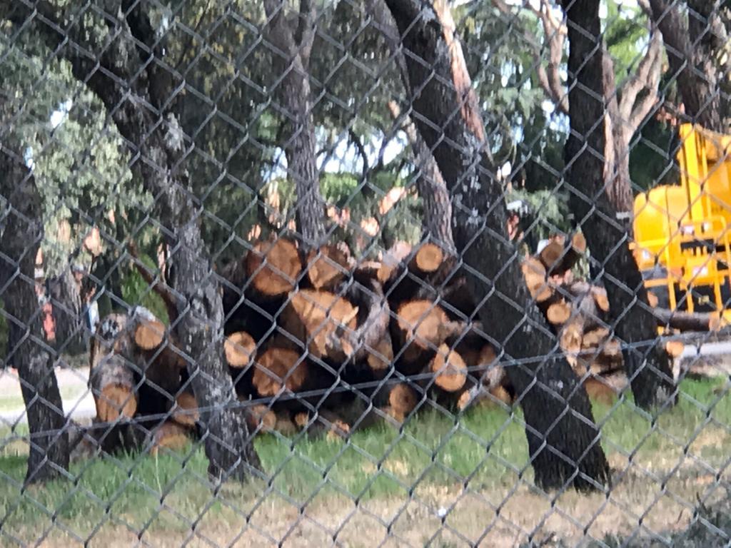 """""""Ecologistas en Acción"""" cuestiona una tala de árboles en Majadahonda con permiso del Ayuntamiento y la Comunidad"""