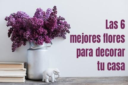 """Los consejos de """"Lola Flora.com"""": las 6 mejores flores para decorar tu casa"""