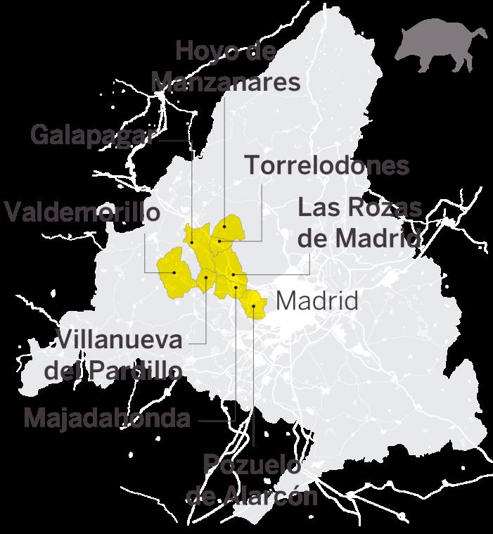 """Jabalíes """"pacíficos"""" en la zona de copas de Torrelodones reabren el debate sobre su control y seguridad"""