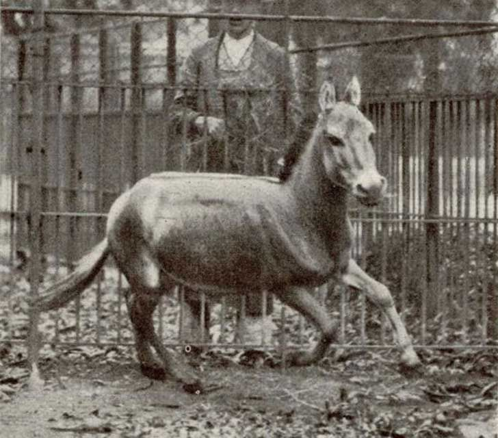 Equitación militar y caballos: el arte del volteo y la doma en el cuartel (Memorias de un soldado de Majadahonda, 1928)