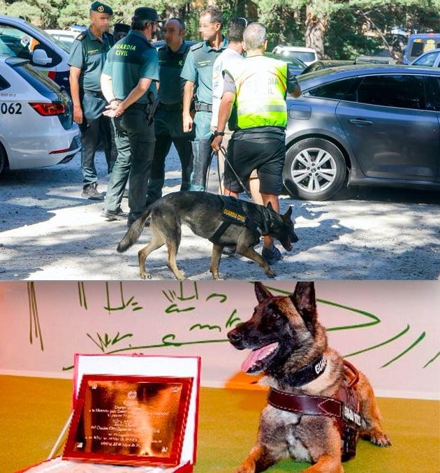 La perra Xena que descubrió al descuartizador de Majadahonda halló el cuerpo de Blanca Fernández Ochoa