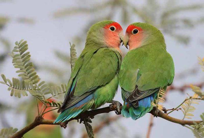 """Una vecina pide ayuda para recuperar su """"agapornis"""", el """"ave del amor"""" y de moda entre los ricos de Majadahonda"""