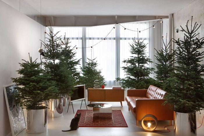 Los abetos de Normandía de Fronda Majadahonda, elegidos como propuesta decorativa para la Navidad 2019-20