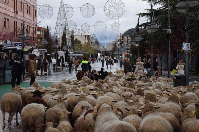 """Nace una oveja del pastor Antonio Robledo junto al """"portal de Belén"""" del Ayuntamiento de Majadahonda"""