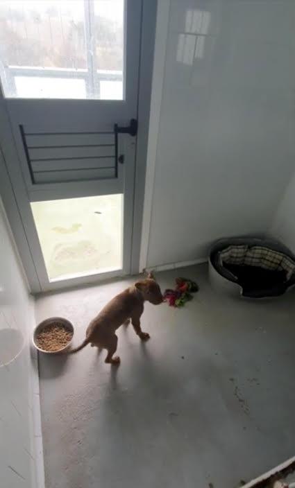 Una voluntaria denuncia que mascotas y cachorros de la perrera de Majadahonda padecen frío y humedad