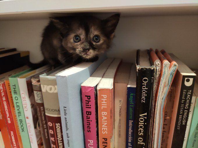 """Breve historia de una gatita que busca casa de acogida: """"solo gente seria de Las Rozas y Majadahonda"""""""