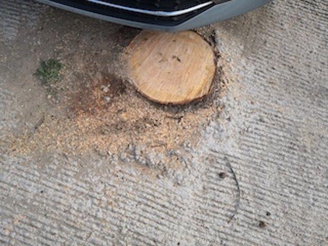 Iberdrola tala 6 árboles en Majadahonda alegando que podían hacer contacto con cables de alta tensión
