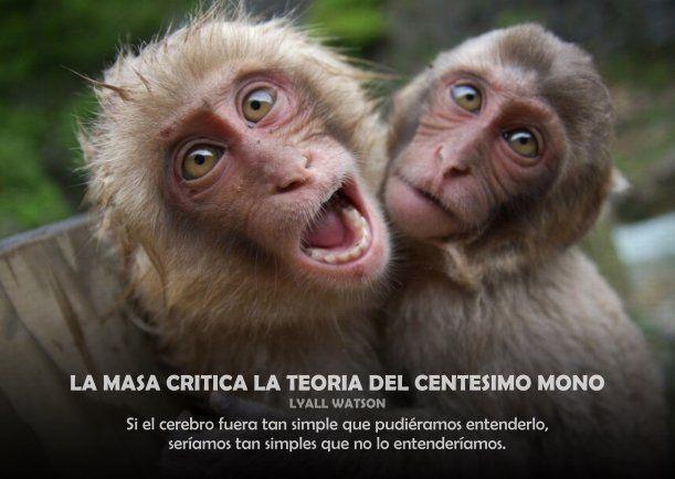 """Coronavirus espiritual"": ""El Centésimo Mono"" y el experimento de la isla japonesa de Koshima"