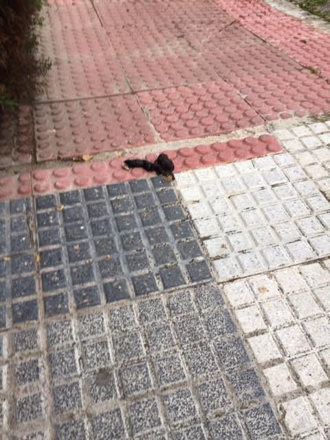 """El Duende Majariego: """"los excrementos caninos callejeros se incrementan con el coronavirus"""""""