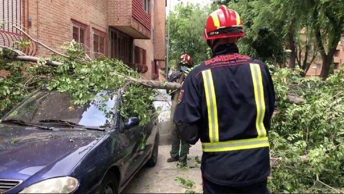 La aparatosa caída de un árbol en Majadahonda sobre varios coches se zanja sin heridos