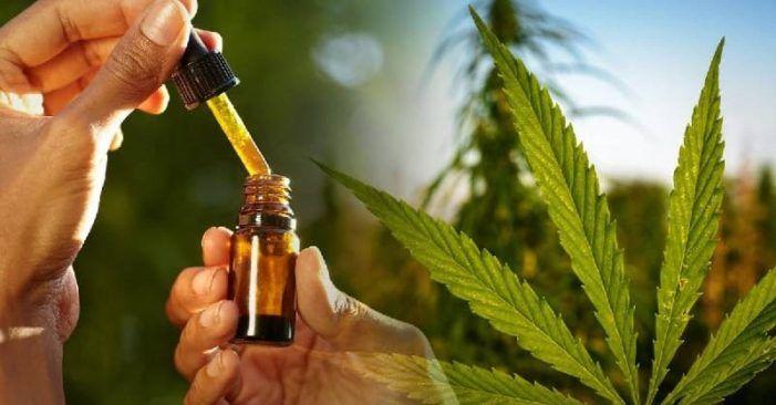 La gran variedad de productos alrededor del mundo del cannabis
