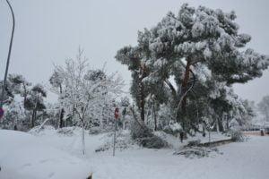 Arboles y ramas caídas en el Monte del Pilar