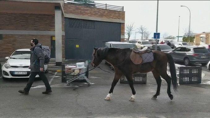Un caballo en Mercadona Majadahonda: el adiestrador de animales Jorge Valdivieso se hace famoso en TV con la nevada
