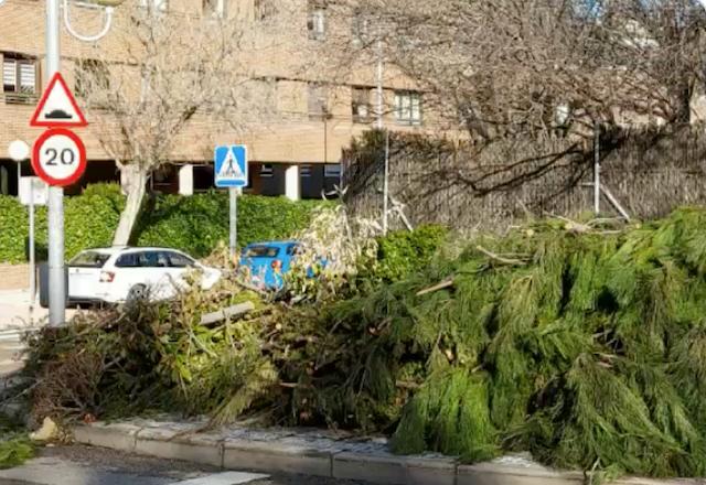 30 días después de la nevada, árboles y ramas sin recoger: protestas vecinales en Majadahonda y Las Rozas