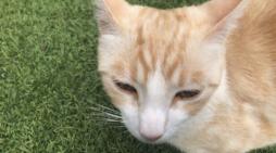 """El """"envenenador de Majadahonda"""" vuelve a actuar: el gato """"Chispa"""" aparece muerto junto al Bousoño"""